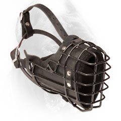 Cane Corso muzzle metal rubber covered basket for winter