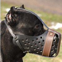 Leather dog muzzle Dondi-pluse style For Cane Corso-M55