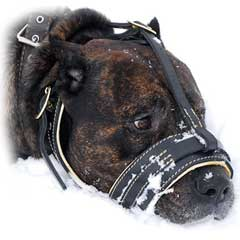 Elegant leathern dog muzzle