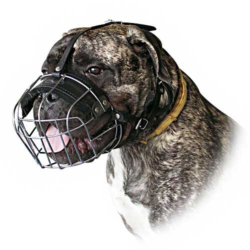 best wire dog muzzle