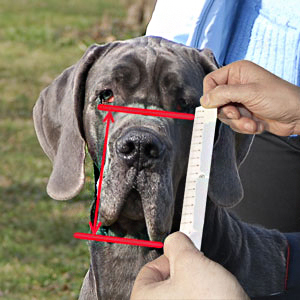 Take measurements of your dog for best fit muzzle