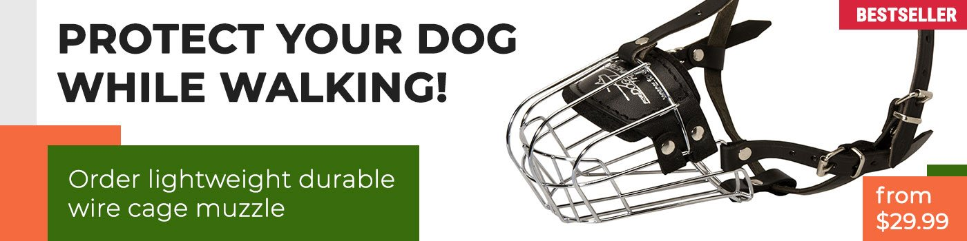 Wire Cage Cane Corso Muzzle for Daily Use