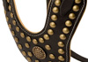 Studded Harnesses